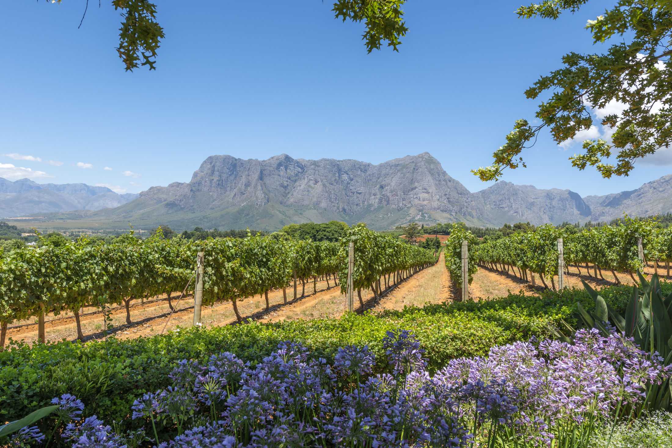 Crystallum in Zuid-Afrika